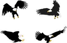 Bald Eagle Illustrations