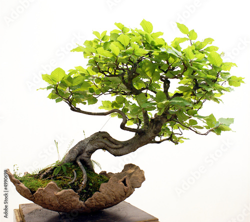 Foto op Canvas Bonsai Bonsai