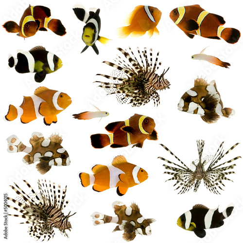 Fotografie, Obraz  Collection of 17 tropical fish