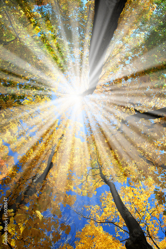 Fotorollo basic - Sunrays in the forest (von Elenathewise)