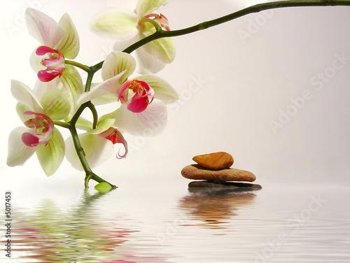 Papiers peints Orchidée galets et orchidée avec reflet dans l'eau