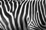 Fototapeta Zebra -  photo of a zebra texture Black and White