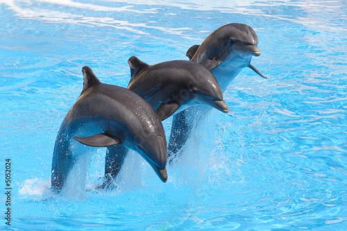 Foto op Plexiglas Dolfijnen Trio of Dolphins
