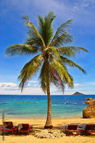 Foto-Rollo - Palm Beach (von VitalyTitov)