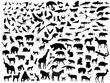 Many vectors of animals