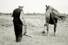 Man With Working Horse