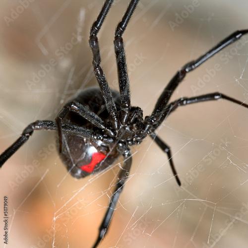 Photo  Black Widow