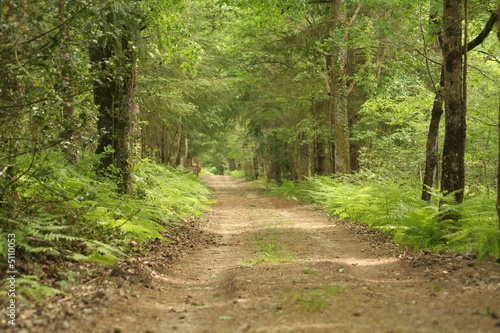 Foto op Canvas Weg in bos le chemin