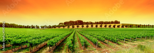 Wall Murals Vineyard Vivid Vineyard