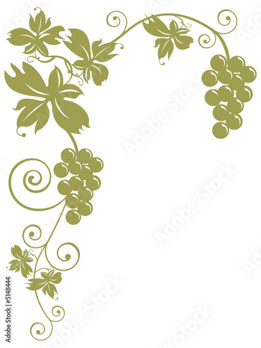 Fotografia  tralcio di vite con grappoli d'uva