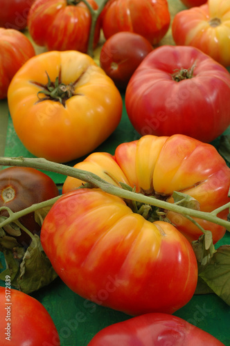 Fotografie, Obraz  Heirloom Tomatos