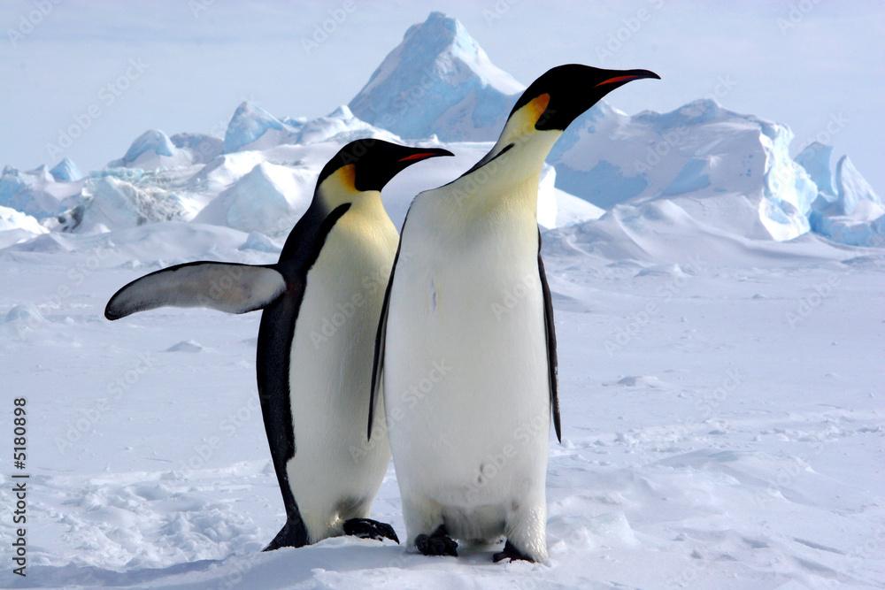 Mais où est le pôle sud ? (Manchots Empereurs/Antarctique)