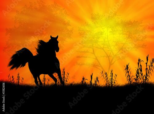 Foto op Canvas Paarden Paesaggio con cavallo