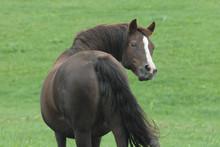 Horse Looking Behind