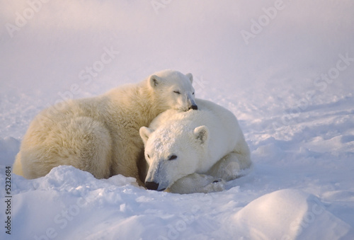 Polar bear with her cub Canvas Print