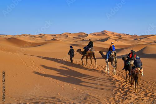 Deurstickers Kameel Marocco, deserto del Sahara