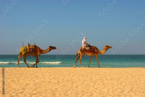 Staande foto Tunesië Camels, desert and ocean