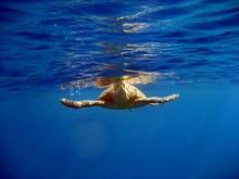 Carretta Schildkröte - Atmet Luft