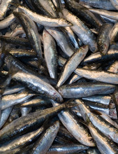 Sardines At The Local Market
