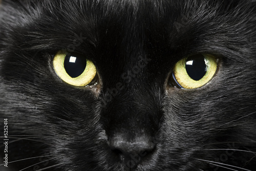 Fotomural black cat