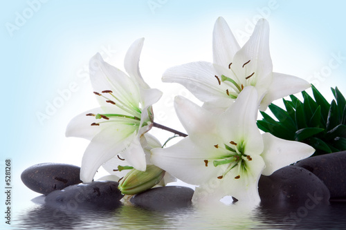 Poster de jardin Nénuphars madonna lily and spa stone