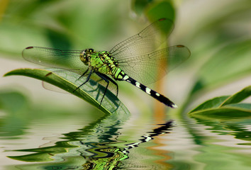 Plakat Dragonfly reflections