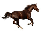 Fototapeta Horses - gallop horse