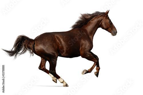Deurstickers Paarden gallop horse