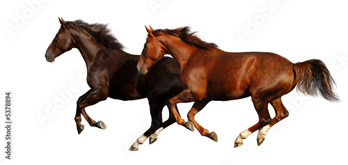 Foto op Canvas Paarden gallop horses