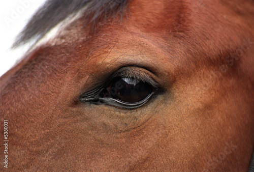 Fotobehang Paarden A detail of an horses eye