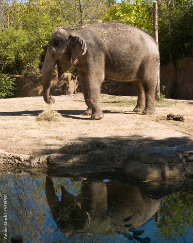 Canvas Prints Elephant The giant elephant standing by a pond.