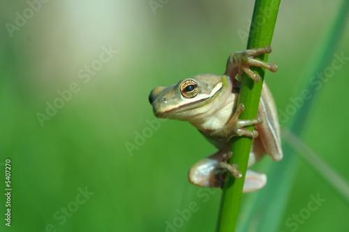 Photo sur Aluminium Grenouille grenouille