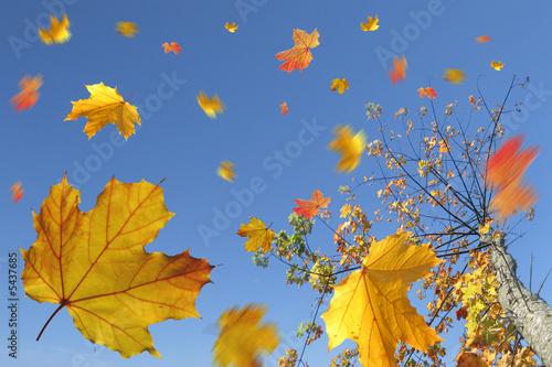 Foto-Kissen - Herbstlaub im Wind