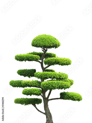 Doppelrollo mit Motiv - Ornamental Tree (von Buddhadl)