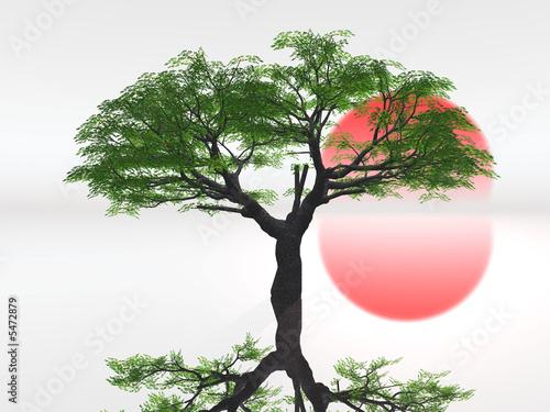 Doppelrollo mit Motiv - paysage zen (von NJ)