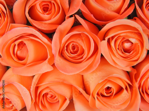 Foto-Lamellen - Background from coral roses