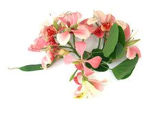 Bouquet De Bauhinia