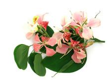 Bouquet De Bauhinias