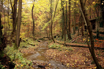 Creek in the forest in Autumn