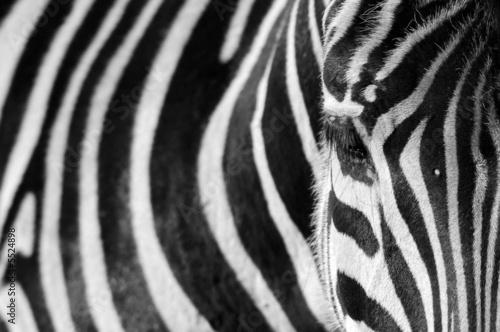 Door stickers Zebra Zebra