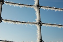 Fence In The Cold