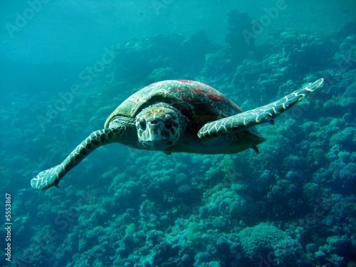 Foto op Aluminium Onder water Caretta Schildkröte