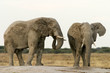 canvas print picture Elefanten an Wasserstelle in Nxai Pan