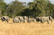 canvas print picture Elefantenherde im Moremi Nature Reserve