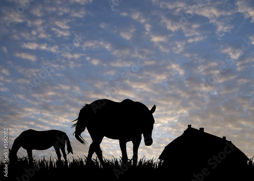 Fototapety, obrazy: horses on pasture near stable at sunset