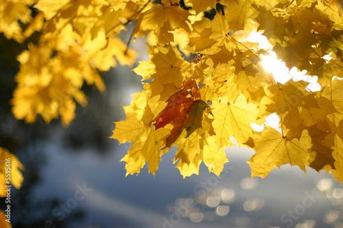 Doppelrollo mit Motiv - Herbst_3