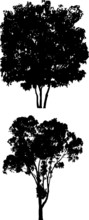 Tree Silhouettes H