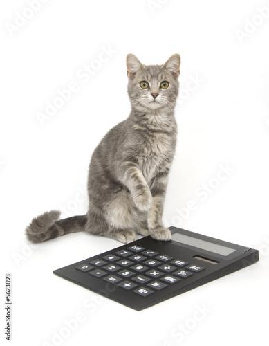 Kitten and calculator - 5623893
