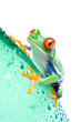 canvas print picture red-eyed tree frog on a water bottle with water droplets