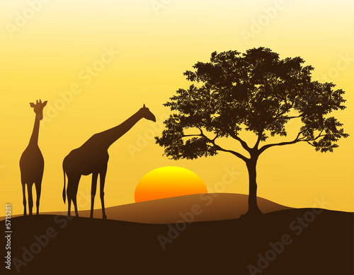 Foto op Aluminium Afrika A pair of giraffes silhouetted against the sunset in Africa